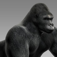 gorilla monkey chimp 3d model