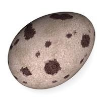 egg quail 3d model