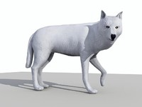 3D Model Low Poly White Wolf
