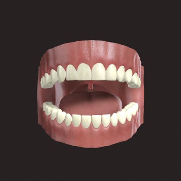 3d gums tongue model