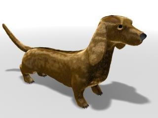 free dog 3d model