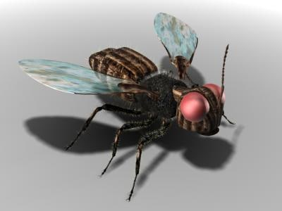 fly 3d max