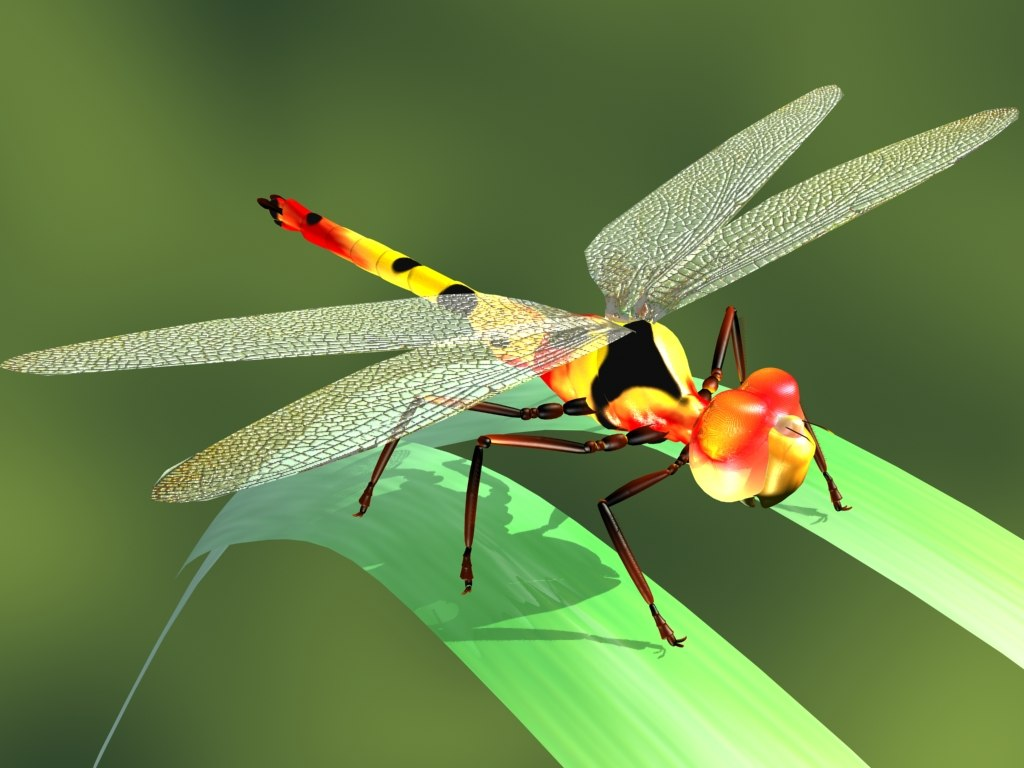 3d model of dragon fly