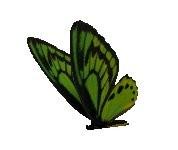 3d butterfly torque