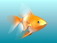 gold fish.rar