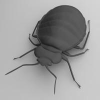 3d bedbug cimex lectularius model