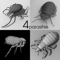 3d parasites louse flea model