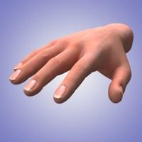 3d model of human hand