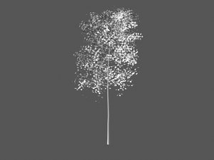 3d model aspen tree