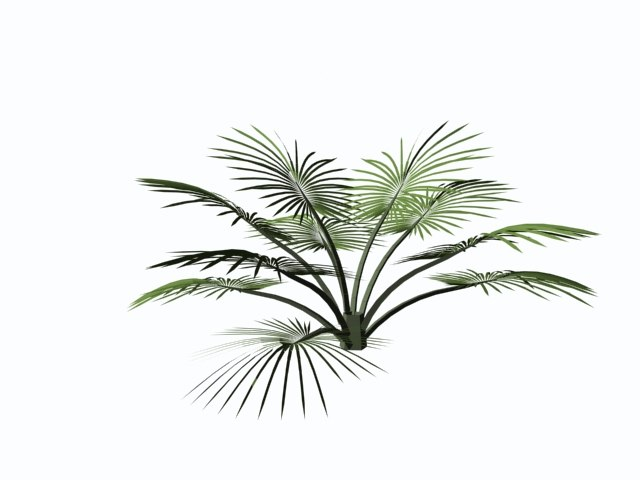 3d palms trees