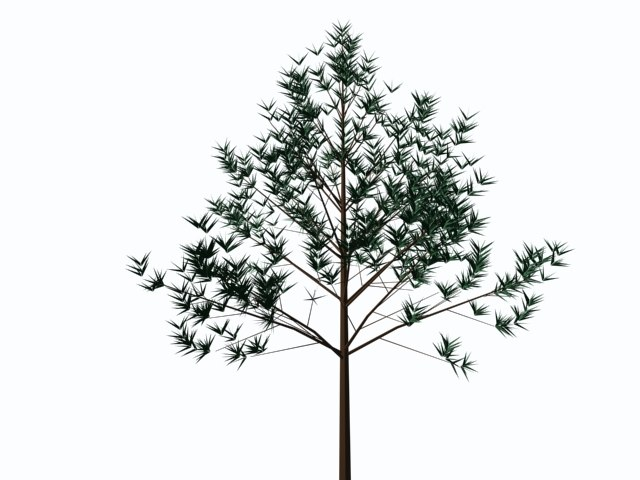 maya trees plants