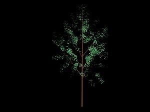 trees max