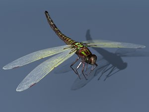 rigged dragonfly max