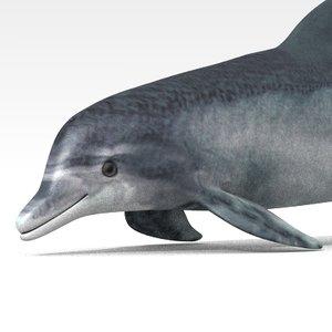 obj dolphin
