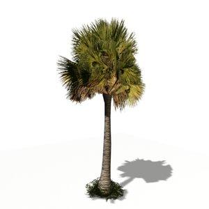 3d sabal palm