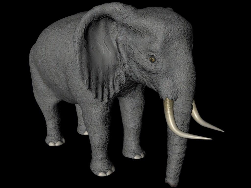 maya african elephant