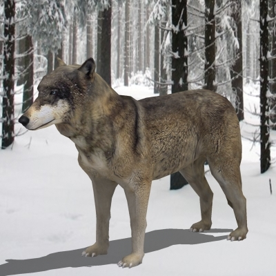 3d realistic low-poly wolf model