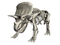 triceratops.max