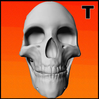 3d resolution skull model