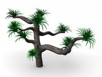suculent tree cactus 3d lwo
