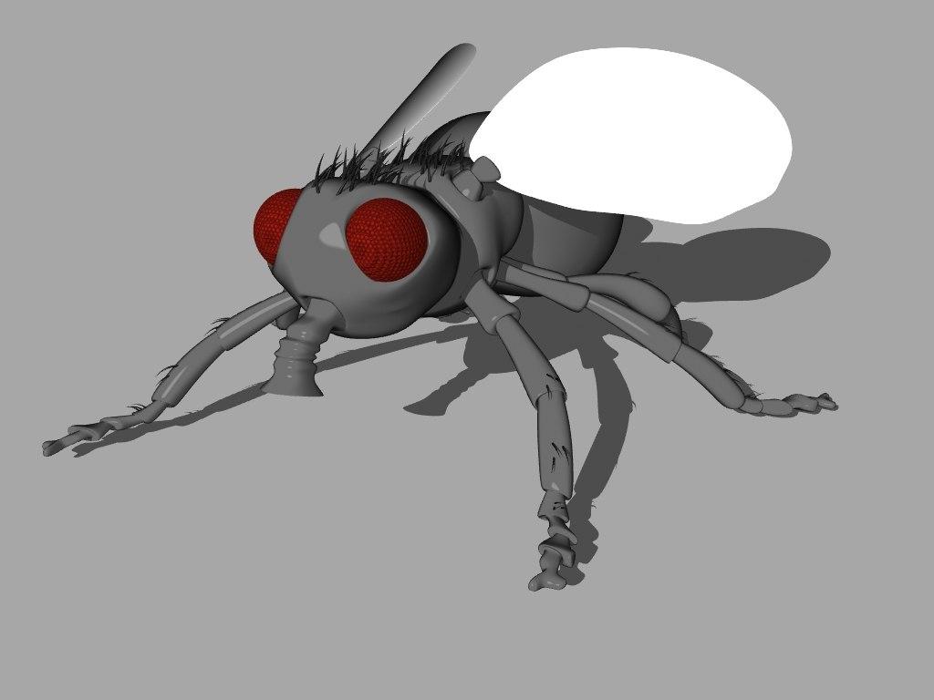 3d house fly model