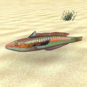 3d model low-poly fish coris julis