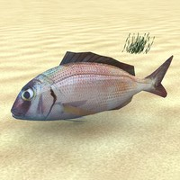 maya fish low-poly pagrus