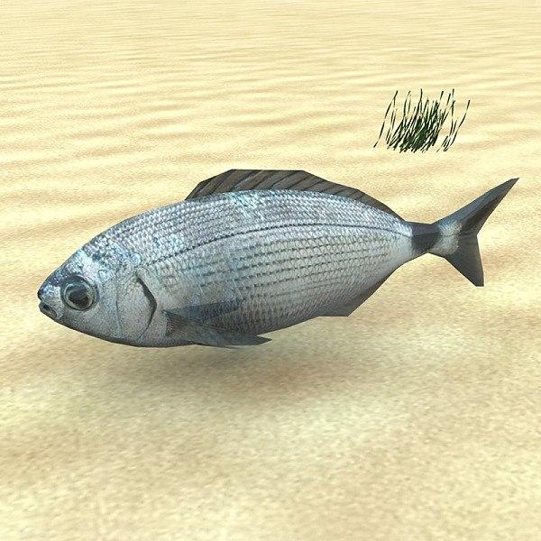 oblada fish 3d model