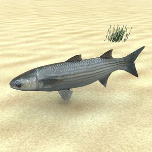 3ds fish low-poly labrosus