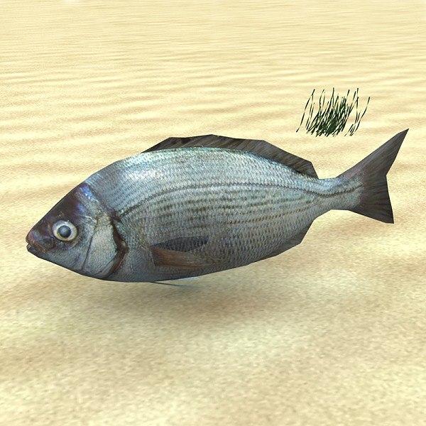 3d fish low-poly spondyliosoma
