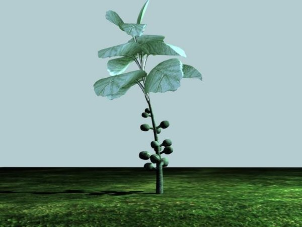 3d model brussels sprouts plant
