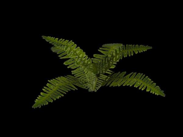 fern alpha 3d max