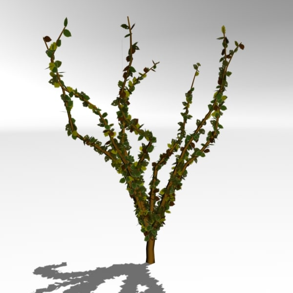 animation leaves fall tree 3d model