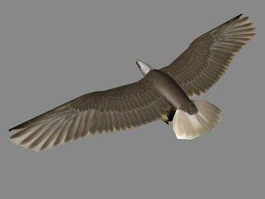 3d model bald eagle
