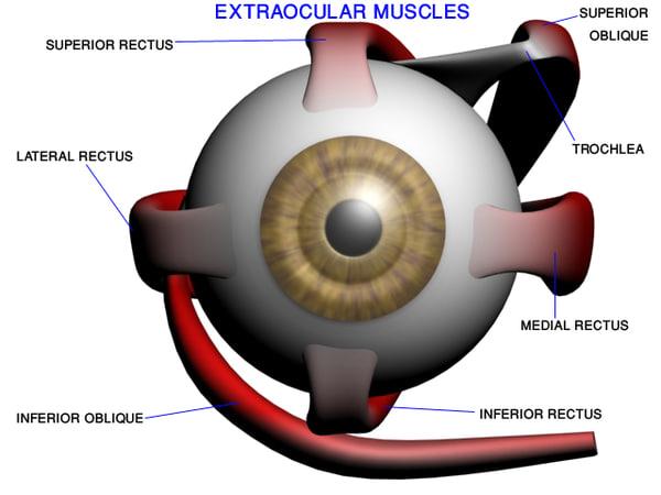 ma accurate eye