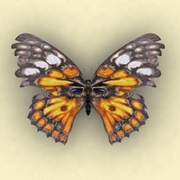 3d max midlle butterfly