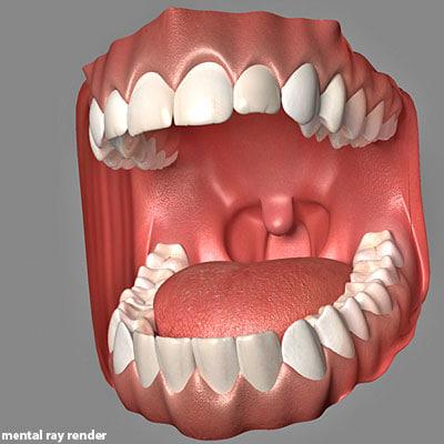 3d model mouth tongue max5