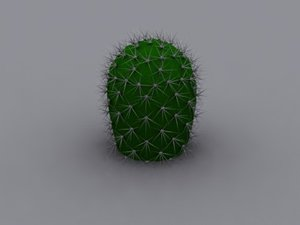 3d model of cactus plant