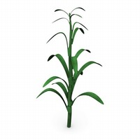 corn stalk.3ds