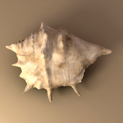 seashell sea shell 3d model