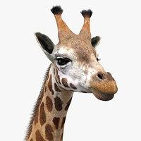 Giraffe(1)