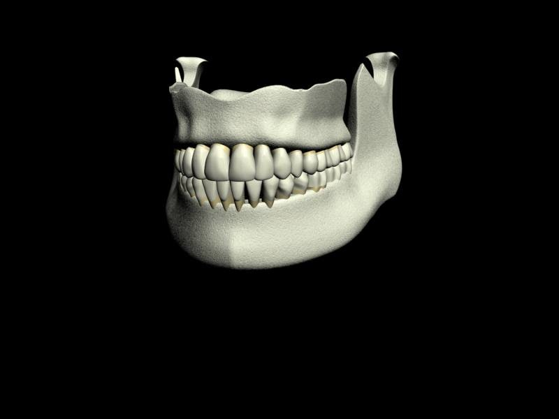 teeth jaws 3d model
