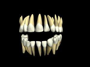 primary teeth max