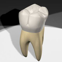 3d model maxillary molar tooth teeth