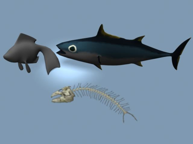 tuna bones goldfish 3d model