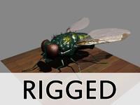 Fly (rigged)