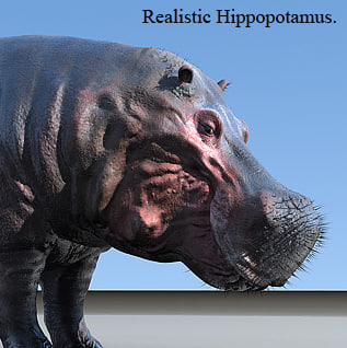3d model hippo realistic