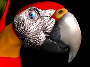 3d lightwave parrot model