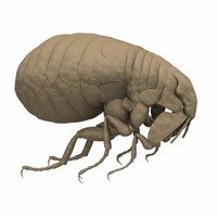 directx human flea