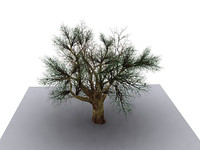 old-tree.max